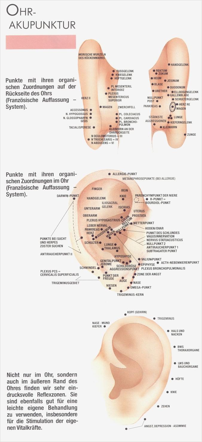zunge zonen organe