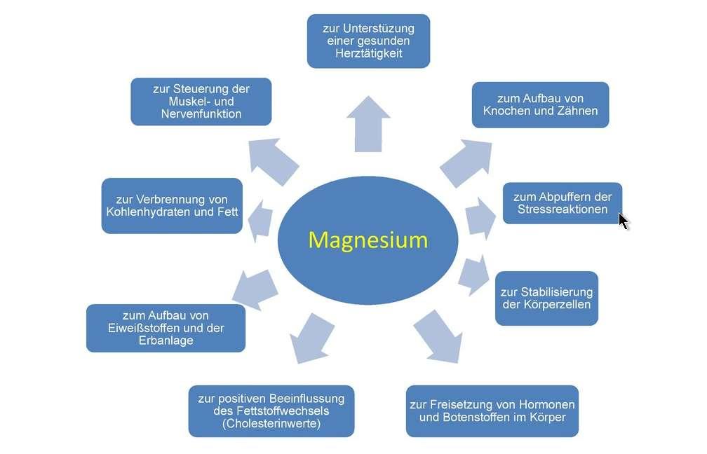 Magnesium - seine enorme Bedeutung für die Gesundheit